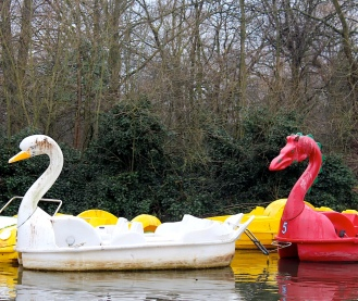 AllyPally.Swans