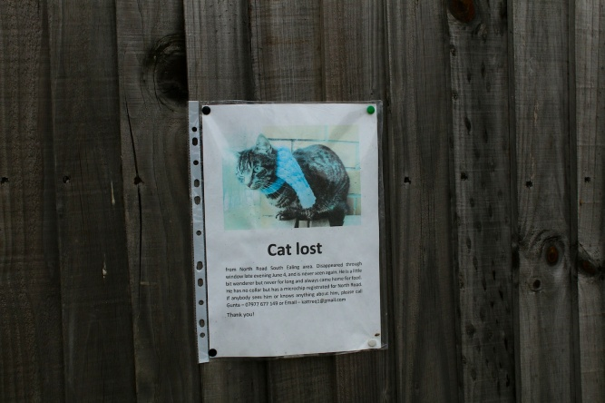 Seg17.CatLost